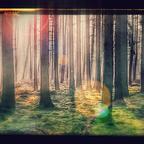 Handyfoto von einem Waldspaziergang,ein wenig bearbeitet(oder verschlimmbessert). HTC one