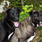 unsere beiden Begleiter: Charly und Tula.